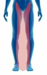 legs (in)